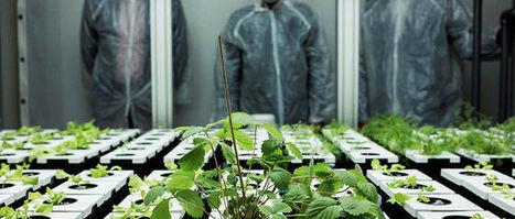 Une ferme sans sol, sans soleil : l'agriculture du futur ? | Attitude BIO | Scoop.it