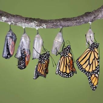 Transform Your Company With Organizational Change Management | Miracle Group | Scoop.it