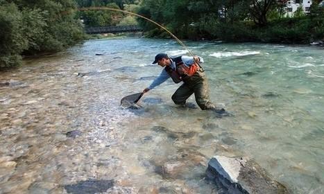 Pêcher un ombre en mouche sèche-Ma boite à pêche   w3p-annuaire.com   Scoop.it