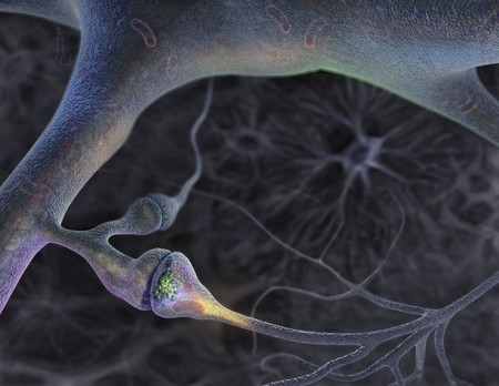 Replacing Synapses with a Single Switch « NextNature.net   The Long Poiesis   Scoop.it
