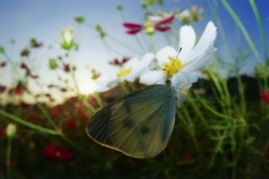 happiness is not intrinsically moral, evening butterfly, shedding old ...   Happiness & Positive Performance   Scoop.it