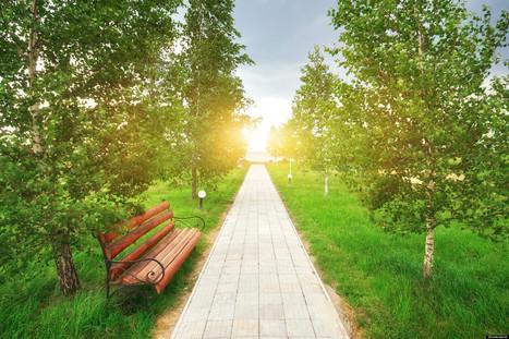 Les espaces verts réduiraient la mortalité dans les villes | Immobilier | Scoop.it