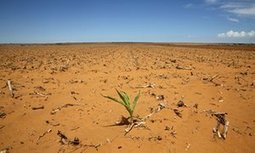How southern Africa is coping with worst global food crisis for 25 years   What we're reading...   Scoop.it