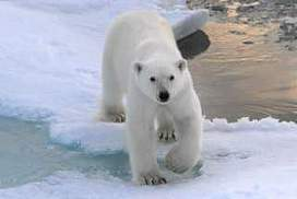 Melting Arctic prompts race for routes, resources | Geography | Scoop.it