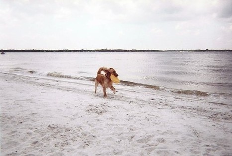 Florida dog-friendly beaches: Here's a list of Florida dog-friendly beaches | Where can I take my dog to the beach? | Scoop.it