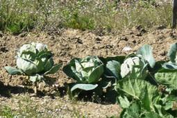 Comment créer un jardin partagé ? | alternatives agricoles | Scoop.it