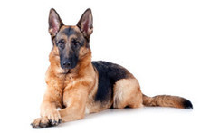 Secrets to Dog Training | Dog Obedience Training to Solve Dog Behavior Problems | cats & dogs! | Scoop.it