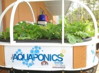Aquaponics | Vertical Farm - Food Factory | Scoop.it