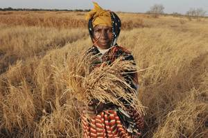 World hunger falls to under 800 million, eradication is next goal - FAO (2015) | Food Policy | Scoop.it