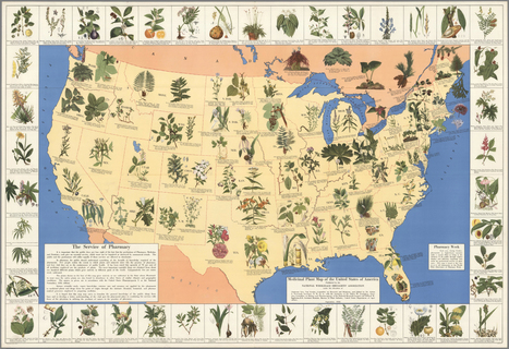 Amazing 1930's Pharmacist Map of 'Herbal Cures' Released to Public   Mapping mindset   Scoop.it
