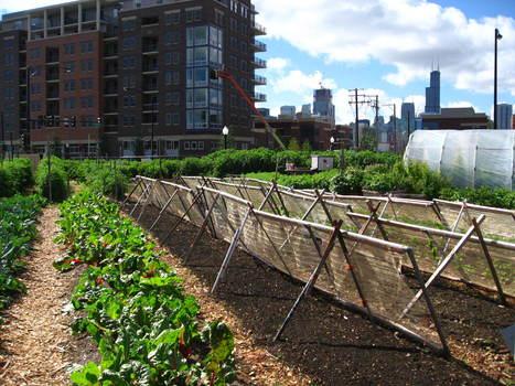 L'agriculture urbaine : une jeune pousse en devenir | Agriculture urbaine et rooftop | Scoop.it