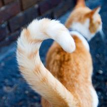 Filmé en train de secouer son chat par la queue, il est condamné par la justice | CaniCatNews-actualité | Scoop.it