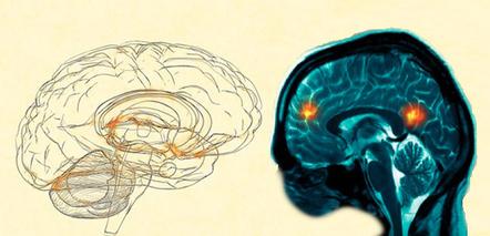The Saviors of Literature? Neurohumanities vs. Psychology « Ross ... | Writing | Scoop.it