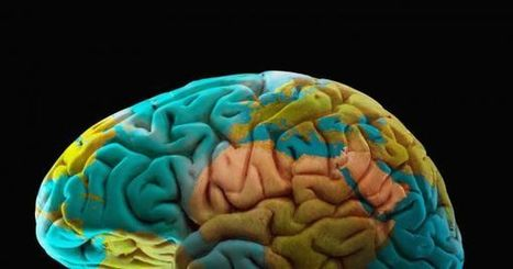Scientists Unveil a New Map of the Brain With Unrivaled Resolution | IELTS, ESP, EAP and CALL | Scoop.it