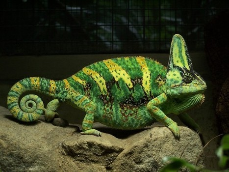Lizards Need Social Lives, Too - Wired Science   REPTILICIOUS   Scoop.it