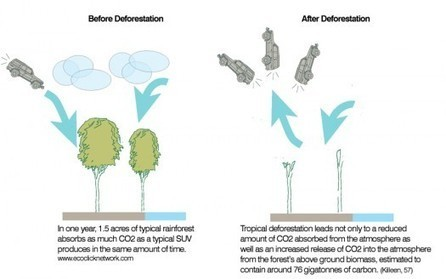 Urban Omnibus » Clip-on Architecture: Reforesting Cities | Wiki_Universe | Scoop.it