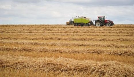 Le rendement des champs de blé en baisse de 30% en France - L'Express | Agriculture en Dordogne | Scoop.it