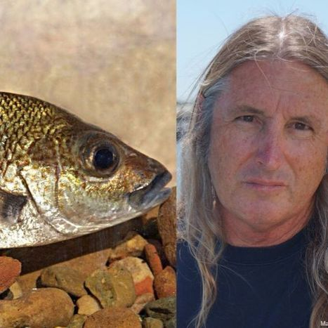 'A great honour': New fish species named after author Tim Winton | Fragments of Science | Scoop.it