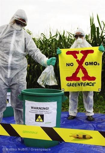 Vermont law mandates labeling of GMO food - Greenpeace Blogs | Monsanto Sucks | Scoop.it