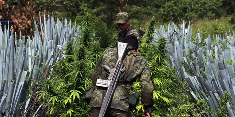 Mexico Considers Legalizing Marijuana | Illegal Drugs and Organised Crime | Scoop.it