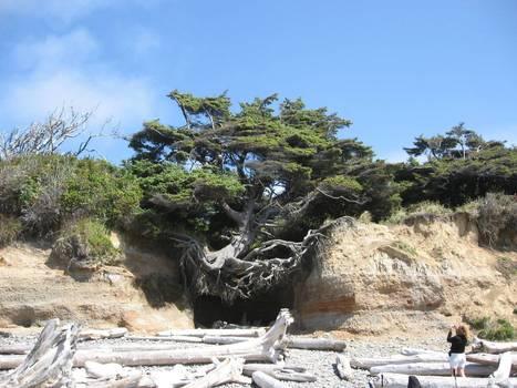 Oregon coast survivor | Harmony Nature | Scoop.it