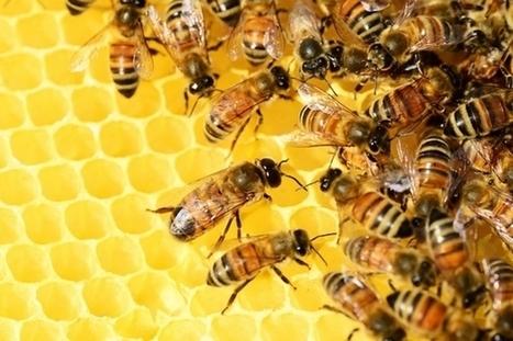 Un Toit pour les Abeilles : parrainer une ruche pour protéger les abeilles   Efficycle   Scoop.it