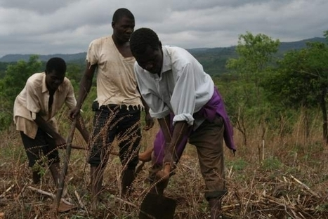 Experts Battle African Soil Health Crisis - Nature World News | Agriculture | Scoop.it