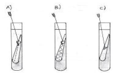 Siembra de Agar Tendido en Tubo. | Microbiología Básica Aplicada | Scoop.it