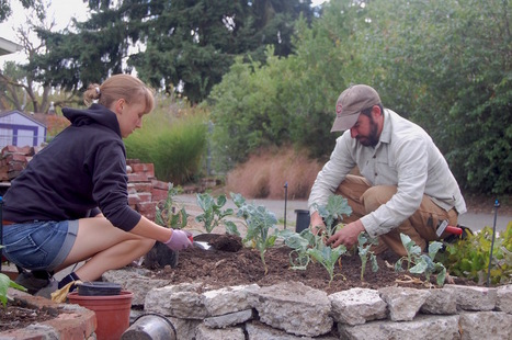 Alleycat Acres Puts New Twist on Community Gardens in Seattle | Economic Networks - Networked Economy | Scoop.it