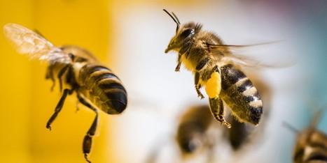 BUND gewinnt vor Gericht gegen Bayer: Sieg für Bienen und Meinungsfreiheit | Offene Gesellschaft - Open Society | Scoop.it