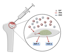Bone-repairing nanoparticles laced with DNA   Chemistry World   Nanomaterials   Scoop.it