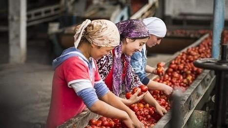 Le Kirghizistan bannit tous les produits OGM   Science   Scoop.it