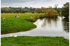 La contamination des cours d'eau par les insecticides sous-estimée | Chimie verte et agroécologie | Scoop.it