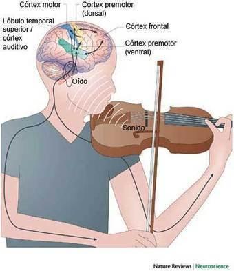 Artículos originales: Música y cerebro   la ciencia cognitiva, una investigación interdisciplinar:Etapas de su construcción, Jesús Martínez Velasco.   Scoop.it