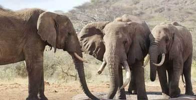 Elephant Highway   practie   Scoop.it