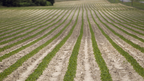 Farm Bill Critics Claim Partial Victory Despite Stalemate : NPR | North Carolina Agriculture | Scoop.it