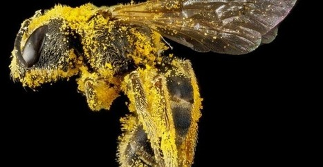 Stunning high resolution photos of bees show the insect's incredible ... | Bees | Scoop.it