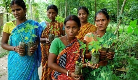 This Village In India Is Planting 111 Trees For Every Newborn Baby Girl | Social Mission | Scoop.it
