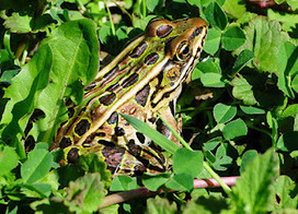 Gardens Inspired: Attract toads to your garden | 100 Acre Wood | Scoop.it