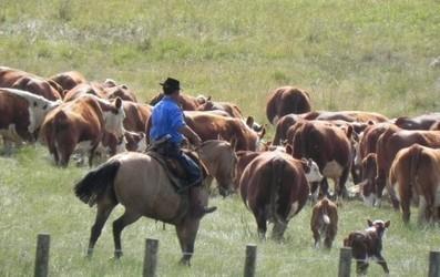 Uruguay empieza a poner la mirada en su recurso principal | Agricultura y Ganaderia | Scoop.it