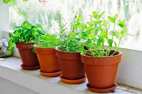 10 alimentos curativos que puedes crecer en tu hogar. | Alimentos | Scoop.it