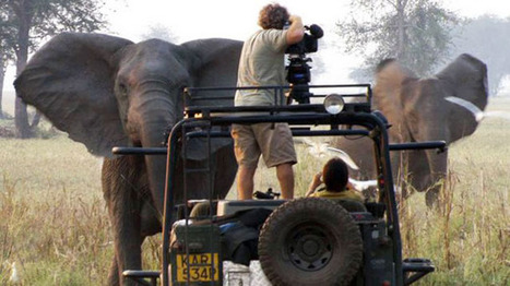 National Geographic Events - War Elephants | Artifacts | Scoop.it