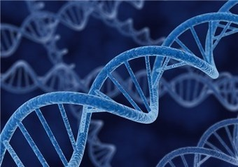 DNA Repair Helps Prevent Cancer - Tasnim News Agency | DNA repair | Scoop.it