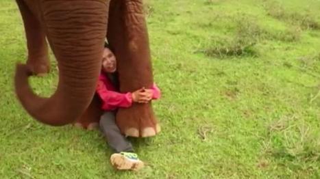 VIDEO. Cette Thaïlandaise sauve les éléphants maltraités par l'industrie touristique | Biodiversité | Scoop.it