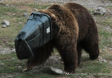 Haines man charged for shooting brown bear, cubs in his trash | Criminology and Economic Theory | Scoop.it