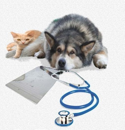Choosing And Finding A Good Veterinarian | Selecting the Best Animal Hospital in Tucker | Scoop.it