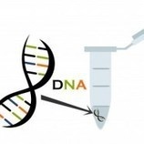 DNA Genealogy By RecordClick.com | Professional Genealogist | Scoop.it