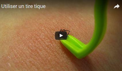 Recommandations en cas de morsure de tique | Variétés entomologiques | Scoop.it