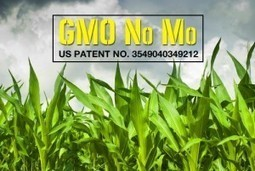 The Non-GMO GMO? Latest attempt by the biotech industry to further corrupt our food system | YOUR FOOD, YOUR ENVIRONMENT, YOUR HEALTH: #Biotech #GMOs #Pesticides #Chemicals #FactoryFarms #CAFOs #BigFood | Scoop.it