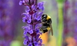 Bees feeding on fungicide-dosed flowers develop health issues, studies say | Food issues | Scoop.it